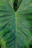 Leaf foliage. Leaf in botanical garden macro Stock Photo