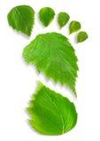 Leaf Footprint Stock Photo