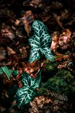 Big leaf on the floor royalty free stock images