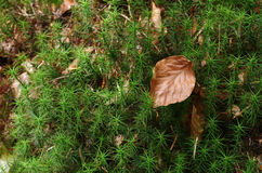 Leaf in forest of  Schwarzwald Royalty Free Stock Image