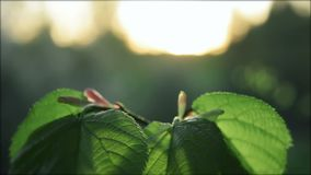 Leaf in the forest. With sunset breeze stock video footage