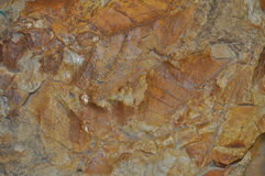 Leaf fossil. Laid out in sand stone Royalty Free Stock Images