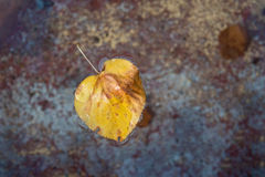 A leaf in fountain water. A yellow autumn leaf in fountain water Stock Images