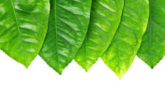 Leaf_frame Stock Images