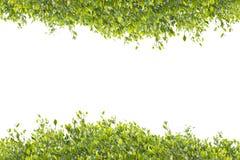 Leaf frame Stock Photo
