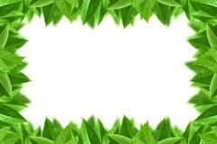 Leaf frame Stock Photography
