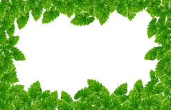 Leaf frame Stock Images