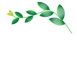 Leaf of frame. On  background Royalty Free Stock Photo