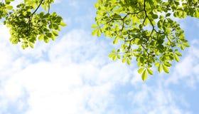 Leaf Frame Stock Images