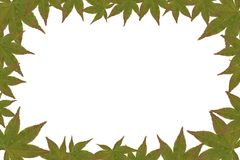 Leaf Frame. Border made from photo of Japanese Maple Leaf stock photos