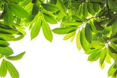 Leaf Frame Royalty Free Stock Images