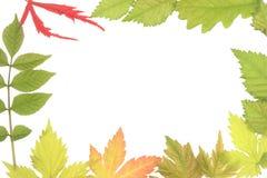 Leaf frame. Different Spring leaves as a border or frame stock photos