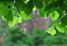Leaf frame. Leaves at sunrise framing the blurred background Royalty Free Stock Photos