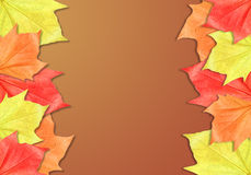 Leaf Frame with Brown Background Stock Photo