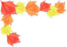 Leaf Frame. Maple leaf frame on white background. It can be used as a Halloween or Thanksgiving image stock images