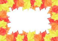 Leaf Frame. Maple leaf frame on white background. It can be used as a Halloween or Thanksgiving image royalty free stock images