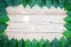 Leaf frame Stock Photo