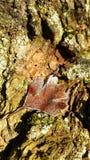 Leaf in freeze. Frozen leaf on wood background Stock Image