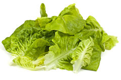 Leaf fresh lettuce Royalty Free Stock Photo