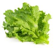 Leaf fresh lettuce Royalty Free Stock Images