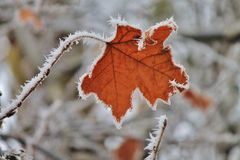 Leaf fringed in ice. Single leaf fringed with icy frost Royalty Free Stock Photos