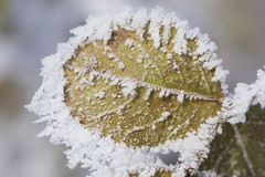 Leaf with frost and ice Stock Photo