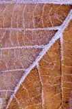 Leaf with frost pattern Stock Image
