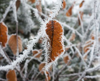 Leaf with frost winter shot Royalty Free Stock Images