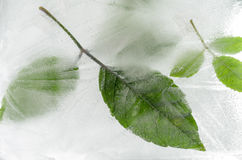 Leaf frozen in ice Royalty Free Stock Image