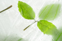 Leaf frozen in ice Stock Photos