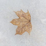 Leaf frozen in ice Royalty Free Stock Images