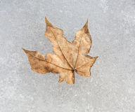 Leaf frozen in ice Stock Image