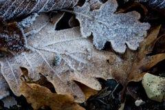 Leaf frozen Royalty Free Stock Photo