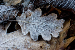 Leaf frozen Royalty Free Stock Images