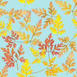 Leaf geranium, pelargonium. Seamless pattern texture of flowers. Stock Images