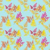 Leaf geranium, pelargonium. Seamless pattern texture of flowers. Stock Photo