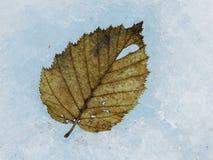 Leaf on Glacier Royalty Free Stock Photos