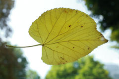 Leaf on glass. Autumn 2015 Royalty Free Stock Images