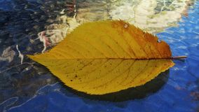 Leaf on a glass table stock photo