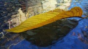 Leaf on a glass table stock photos