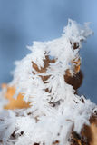 Leaf with glaze crystal Stock Photography