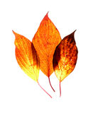 Leaf on a gleam Royalty Free Stock Image