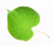 Leaf on a gleam. Capillaries of a leaf are visible Royalty Free Stock Photography
