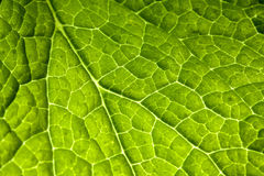 Leaf. Gods beauty is abundant in every small thing Royalty Free Stock Photography