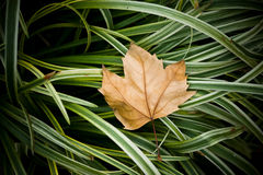 Leaf on grass Stock Photo