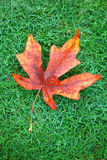 Leaf on Grass Royalty Free Stock Images