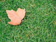Leaf on the grass. Autumn leaf on the grass in the Flagstaff Gardens, Melbourne stock photos