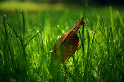 Leaf in grass Stock Photos