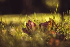 Leaf Grass Stock Images