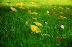 Leaf on the grass, background stock photos